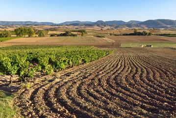 Landscape with vineyards in Badaran, La Rioja, Spain