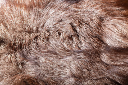 Natural animal fur texture as background