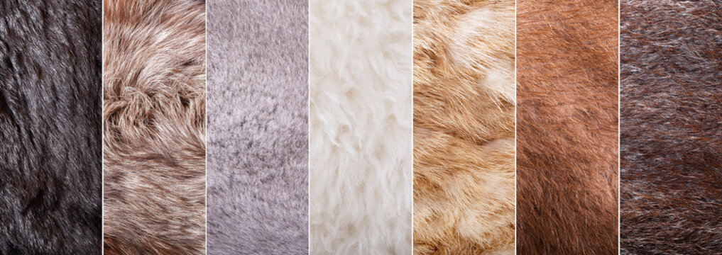 collage of fur texture as background