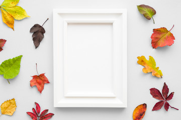 Welcome autumn. Colorful different leaves with white frame on gray desk. Empty place for inspirational, positive text, quote or sayings. Flat lay.
