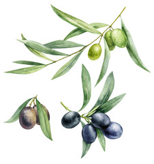 Watercolor illustration set of green and black olives. Hand drawn olive branches on a white isolated background.