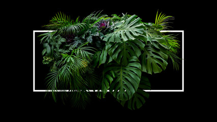 Fotorolgordijn Planten Tropical leaves foliage jungle plant bush floral arrangement nature backdrop with white frame on black background.