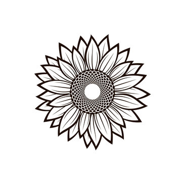 illustration with flower of sunflower isolated on white background