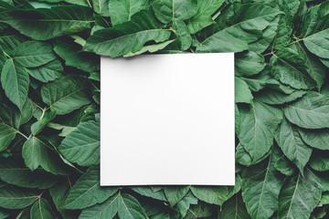 Wall Mural - Empty card with green leaves