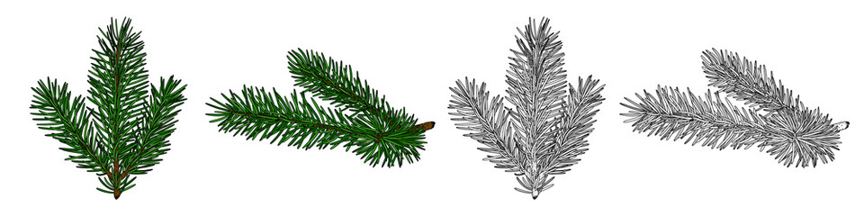 Set of vector images of fir branches, black and white and in color. EPS 10