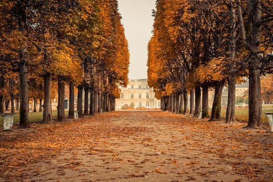 Alley of Luxembourg Gardens, Jardin du Luxembourg in Paris France, covered with orange autumn leaves on an Autumn day