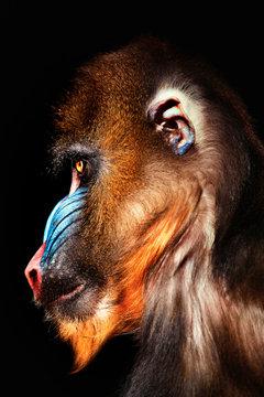 portrait of a profile mandrel
