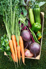 Fresh vegetable harvest in the wooden box: carrot, beetroot, pepper, zuccini, beans