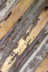 Abstract wood texture with peeling paint  background