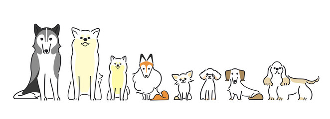 犬 ポーズ 表情 8匹 整列 おすわり タ