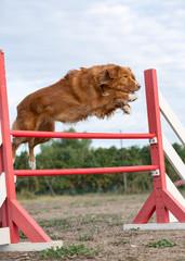 training of agility