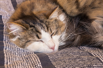 detail of tabby cat sleeping on blue duvet cover