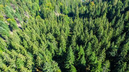 Fotobehang Bossen aerial view black forest Germany
