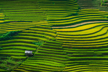 Poster Rice fields Landscape rice fields on terraced of Mu Cang Chai, YenBai, Vietnam