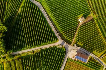 Obraz vista aerea di vigneti con fattoria con  - fototapety do salonu