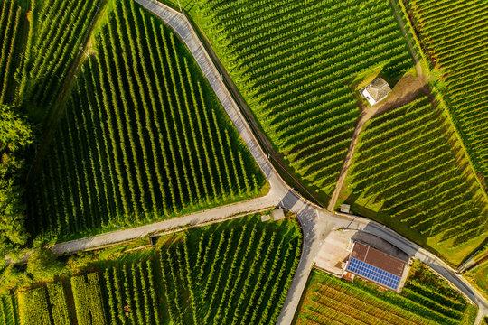 vista aerea di vigneti con fattoria con
