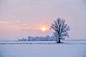 Winter landscape. Lonely tree in a snowy field at sunrise - image Wall mural