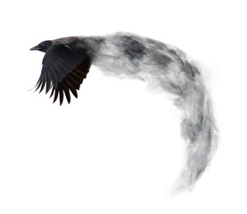 dark crow flying from grey smoke isolated on white