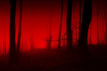 horror forest scene, red light in scary night landscape Fototapete