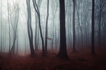Foto auf Acrylglas Rosa dunkel dark mysterious woods landscape, misty forest scenery