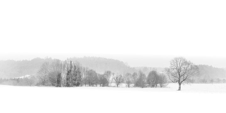Panorama Winter Landschaft im Nebel mit Schnee schwarz-weiss