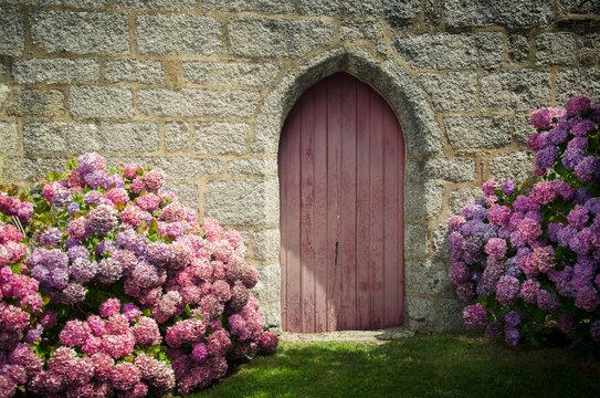 hortensia devant une vieille porte médiévale en bois ancien