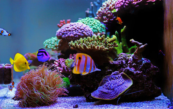Beautiful saltwater coral reef aquarium tank