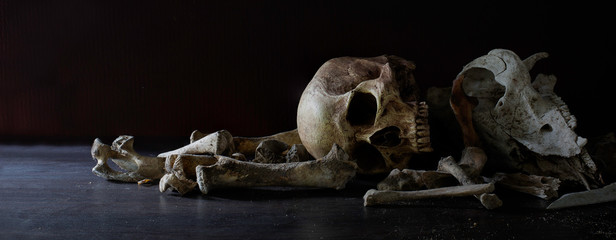 Skulls animal and human with pile of bone in dark background, last of life is death, Still life image and select focus.
