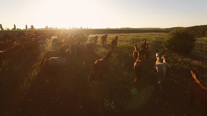 Horses running on the meadow. Aerial view of hoofed animals. We are might and power. Each is his own leader.