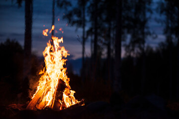 Burning campfire on a dark night in a forest