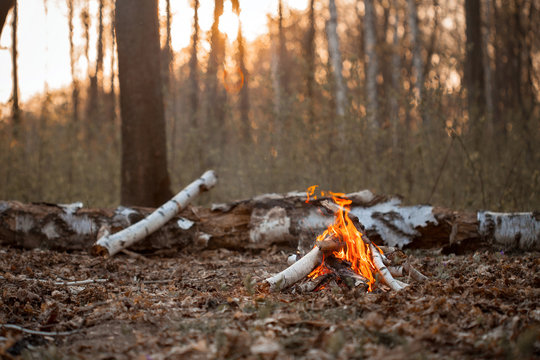 Small bonfire in autumn forest at sunset