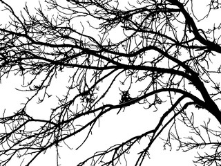 silhouette of tree twig or Realistic silhouette of tree bare branches without leaves on a white background. Tree Twigs Silhouette Vector