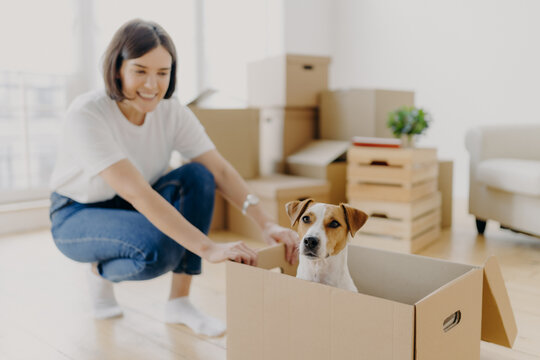 Happy young female house owner poses near cartboard box with favourite pet, have fun during day of relocation, poses in living room with stacks of carton containers with personal belongings.