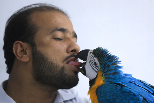A man plays with his eight-month-old blue and gold pet macaw as he is selling at a bird market in Peshawar,