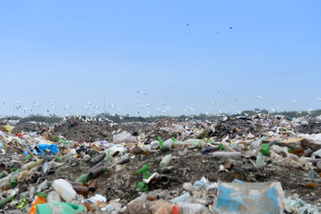 Trash Landfill With Birds Flying Over