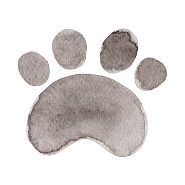 Watercolor paw. Hand painted Illustration isolated on white background.