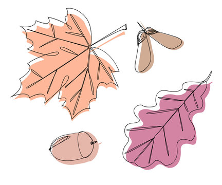 Maple and oak leaves and acorn