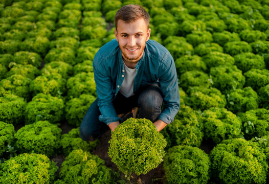 Contented farmer lad holding a head of lettuce on a lettuce field top view