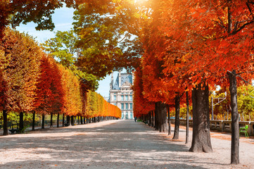 Yellow autumn trees in Tuileries Garden near Louvre in Paris, France. Beautiful autumn landscape
