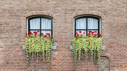 Background with classic farmer or caste windows with red geranaium and hanging plants