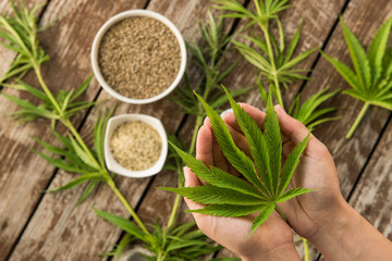 Hemp leaves and seeds from above on wooden background
