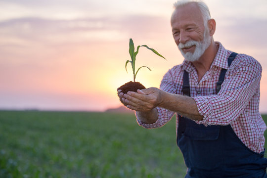 Farmer holding young corn with soil in hands