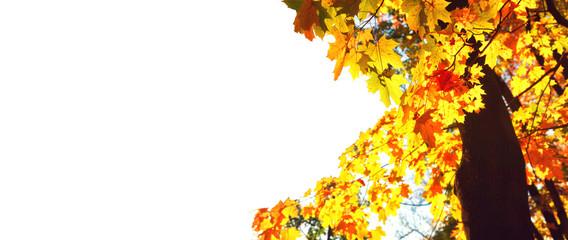 Fototapete - Goldener Herbst auf weissem Hintergrund