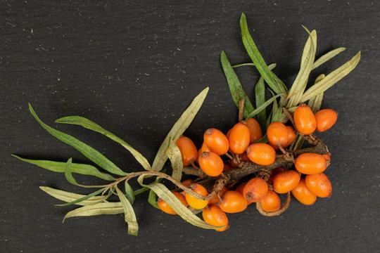 Lot of whole ripe orange sea buckthorn berry bunch flatlay on grey stone