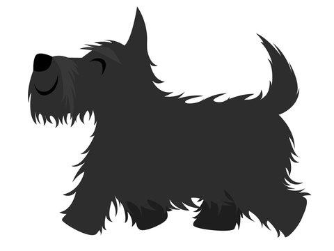 Smiling black Scottish terrier