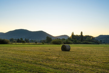 Fotoväggar - bales of hay in field