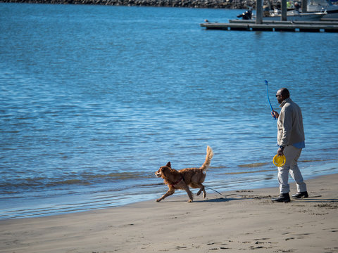 Golden retriever fetching giving chase to ball throw into ocean by man playing fetch