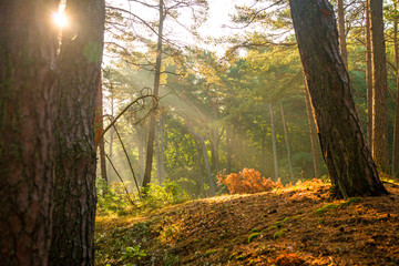 sun rays in a forest in autumnal colors
