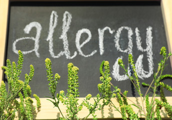 "Ragweed plant (Ambrosia genus) and word ""ALLERGY"" written on chalkboard, closeup"
