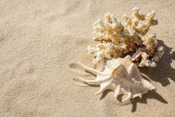 Seashell and coral on beach sand. Space for text